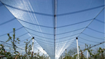 Agricultural Orchard Hail Protection Netting