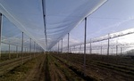 Orchard Hail Protection Netting with Pitched Design